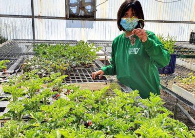 Alumna manipulando plantas vivero