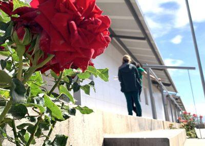 Jardineras y pasillo aulas